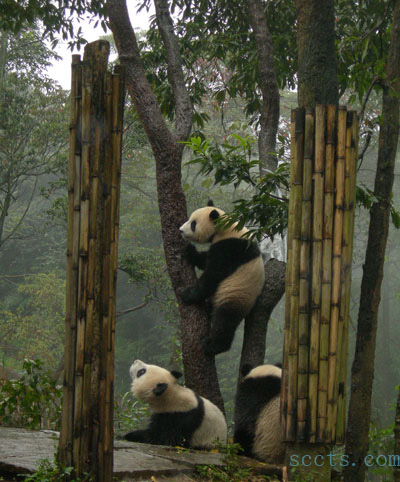 成都地铁2号线线路_大熊猫_大熊猫繁殖基地_成都熊猫基地-成都市景点