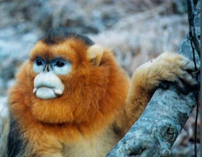 白河金丝猴保护区,九寨沟